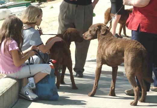 Dog classes - Quails inn restaurant san marcos ...
